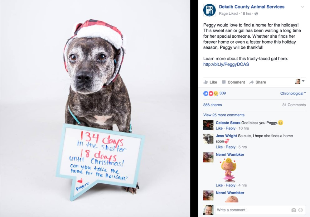 Shelter dog with Christmas note image